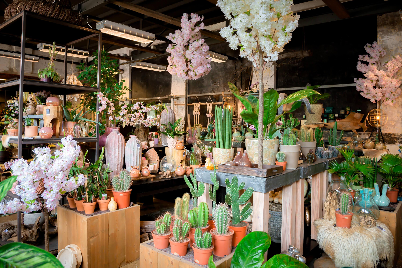 Fotografie winkel of webshop op Texel