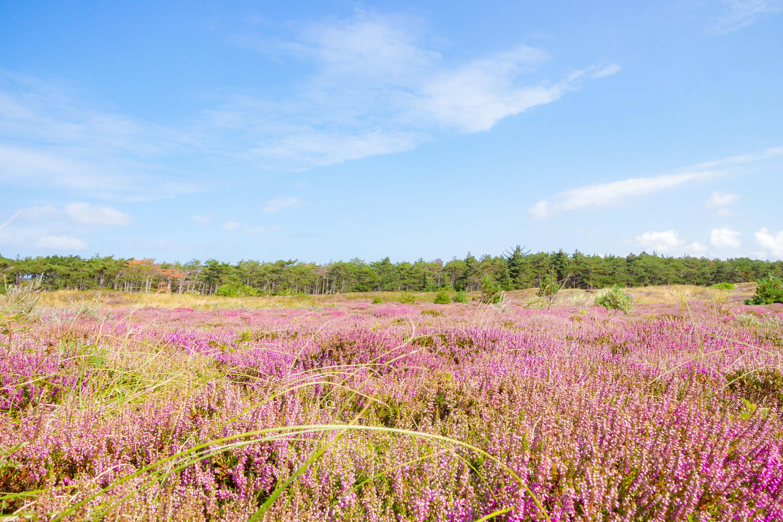Landschapsfotografie op Texel